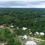 Mapiá florestal