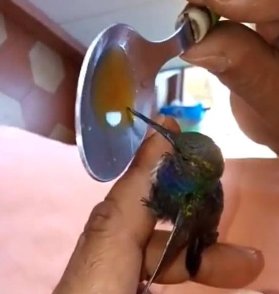 beia-flor tomando daime